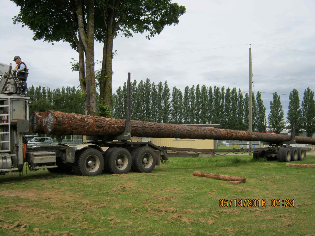 new-trees-2